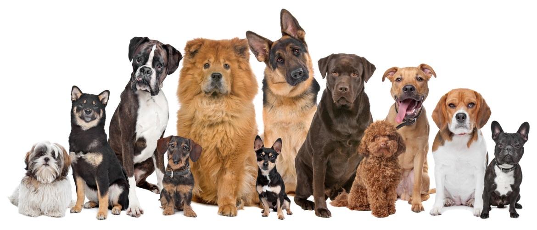 Рейтинг на най-добрата храна за кученца през 2020 г.