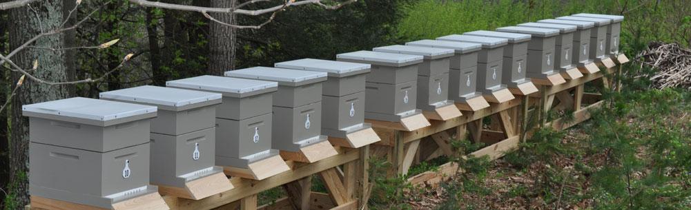 Ocjena najboljih košnica za pčele za 2020. godinu