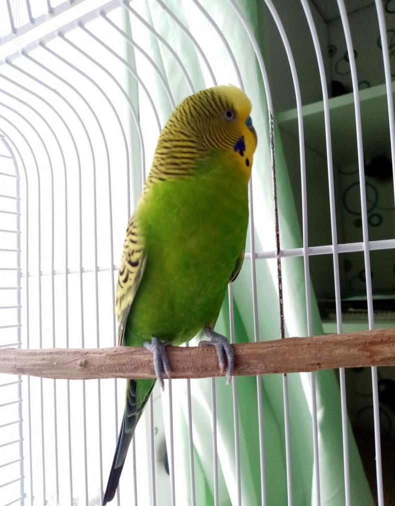 Рейтинг на най-добрите клетки за папагали за 2020 г.