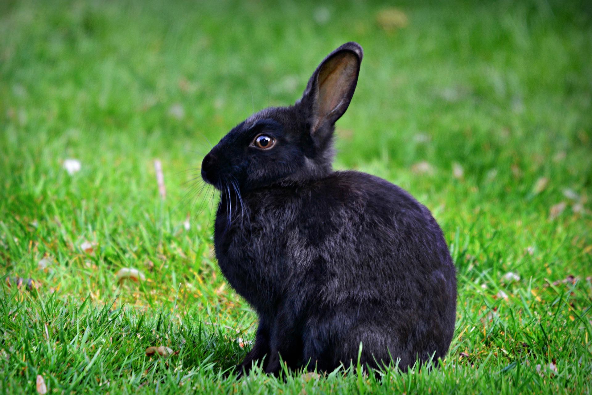 Рейтинг на най-добрите клетки за зайци за 2020 г.